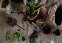 O czym pamiętać zakładając domowy ogródek ziołowy?